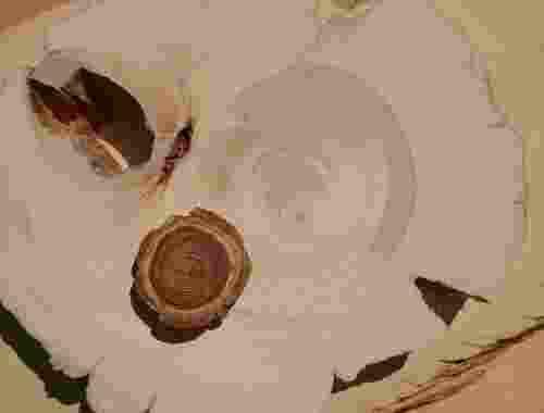 Huon Pine Edles tasmanisches Hart Holz Kiefer aus Australien (3)