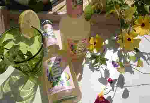 Erfrischungsgetränk 100% organic Paradise Mint now by Lammsbräu (1)