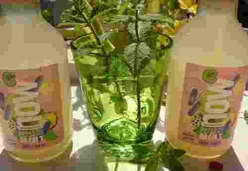 Erfrischungsgetränk 100% organic Paradise Mint now by Lammsbräu (2)