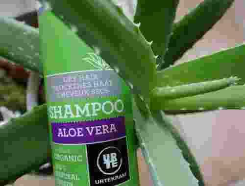 250 ml Aloe Vera Shampoo für trockenes Haar, certified organic von Urtekram--Shampoo certified organic